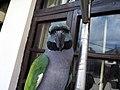 Derbyan Parakeet (Psittacula derbiana) -female.jpg