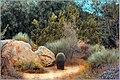Desert (154595753).jpeg