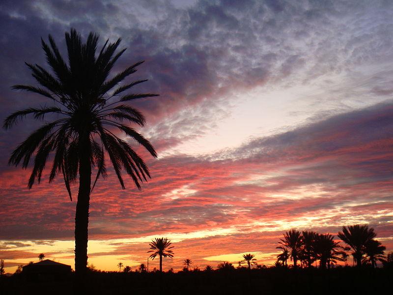 File:Desert Palm.JPG