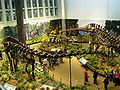 Diplodocus Allosaurus and Apatosaurus at the CMNH 01.jpg