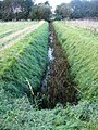 Ditch between fields - geograph.org.uk - 1054246.jpg