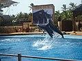 Dolphin Show At uShaka - panoramio.jpg