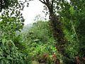 Dominica IMG 4800.jpg