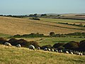 Downland, Seaford - geograph.org.uk - 945317.jpg