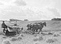 Drie paarden trekken een maaimachine die tevens schoven bindt (zelfbinder), Bestanddeelnr 190-1099.jpg