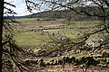 Drystane Dykes - geograph.org.uk - 768608.jpg