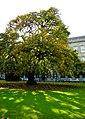 Dublin, Ireland - panoramio (43).jpg