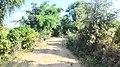 Dugariya, Madhya Pradesh 471101, India - panoramio (79).jpg