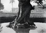 ETH-BIB-Von Wasser umgebener Baumstamm-Kilimanjaroflug 1929-30-LBS MH02-07-0383.tif