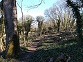 Eaglehead Copse, Isle of Wight, UK.jpg