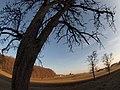 Eggelsberg aus nordwesten fotografiert im Februar 2011 - panoramio.jpg