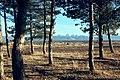 El Macizo del Pico del Lobo-Cebollera desde Grajera.jpg