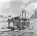 El Muhraka, Karmelgebergte Man uit een druzendorp met muilezel put water uit ee, Bestanddeelnr 255-1425.jpg