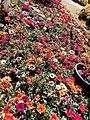 El Zohour Showroomمعرض الزهور بحديقة الاورمان 4.jpg