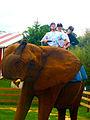 Elephant Rides (5857682530).jpg