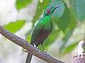 Emerald Starling RWD.jpg