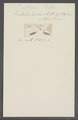 Enchelis deses - - Print - Iconographia Zoologica - Special Collections University of Amsterdam - UBAINV0274 113 25 0003.tif