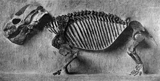Endothiodon - Endothiodon uniseries skeleton, specimen 5618