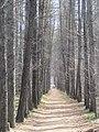Engels, Saratov Oblast, Russia - panoramio (19).jpg