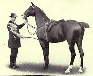 Equitation images fig-023.jpg