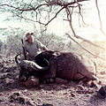 Ernest Hemingway poses with water buffalo, Africa, 1953.jpg