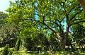 Esche Hauptfriedhof Frankfurt.jpg
