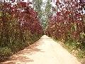 Estrada para a Caixa D'agua da Esperança - panoramio.jpg