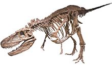 FMNH Daspletosaurus White Background.jpg
