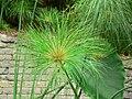 Fale - Giardini Botanici Hanbury in Ventimiglia - 399.jpg