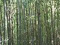 Fale - Giardini Botanici Hanbury in Ventimiglia - 684.jpg