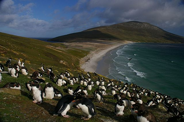 Falkland Islands Penguins by By Ben Tubby (flickr.com) [CC-BY-2.0 (https://creativecommons.org/licenses/by/2.0)], via Wikimedia Commons