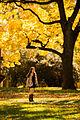 Fall (8167168507).jpg
