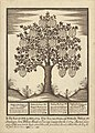 Family tree by Matthias Buchinger.jpg