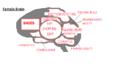 Female Brain.png