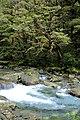 Fiordland N.P. 16.jpg