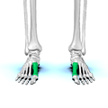 First metatarsal bone03.png