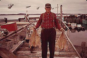 Fishing industry in Canada - A Campobello Island, New Brunswick fisherman in 1973