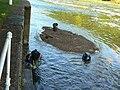 Fishermen at Stoke Weir - geograph.org.uk - 1461853.jpg