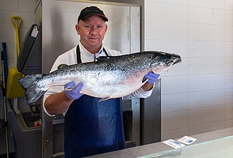 Atlantic salmon - A fishmonger in Lysekil, Sweden shows a Norwegian salmon.