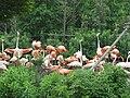 Flamingo1311.JPG