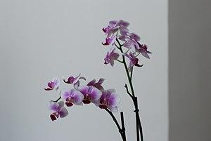 Une plante et ses fleurs eclosées (inflorescence).