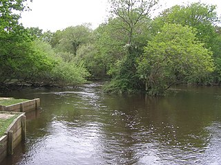 Lymington River SSSI