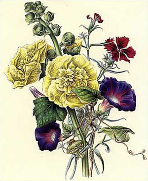 James Andrews (botanical artist) - Image: Flora's Gems 06a