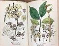 Flora of Thuringia04.jpg