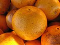 Florida navel orange 2.jpg