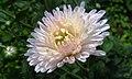 Flower's beauty.jpg