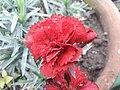 Flower 20181201 091754.jpg