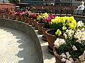 Flower 35 HDR.jpg