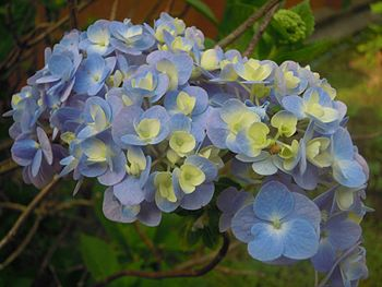 Flowers-name unknown.jpg