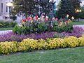 Flowers in Civic Center Denver.jpg